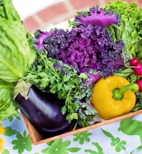 mevsim değişikliğinde beslenme 1